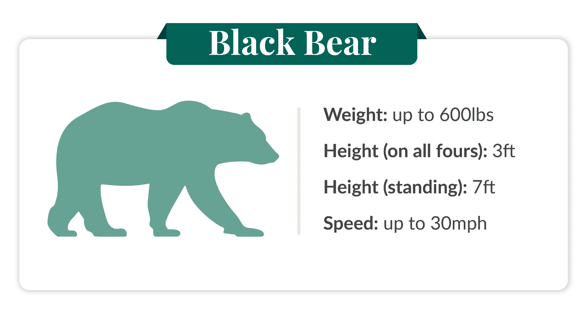 how fast can a black bear run