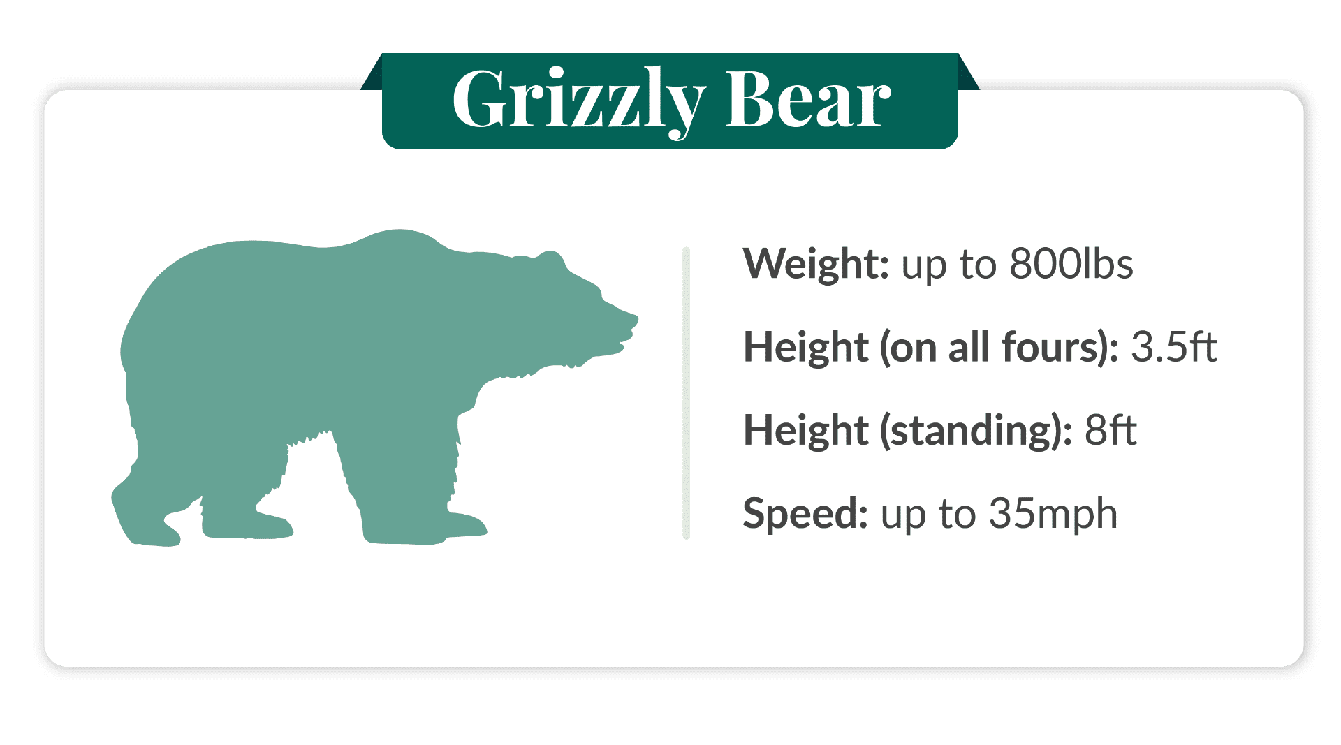 how fast can a grizzly bear run